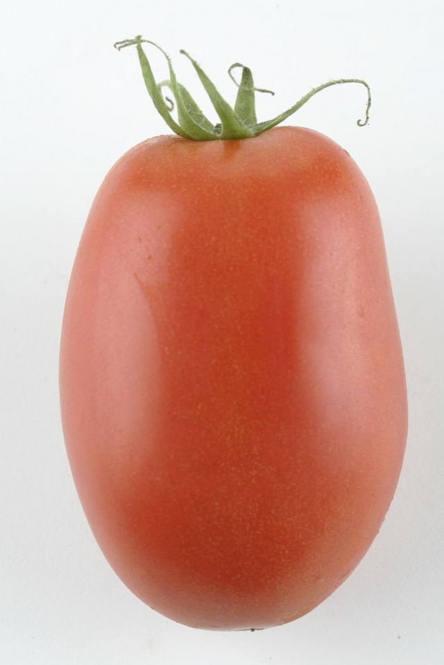 Tomate San Marzano.