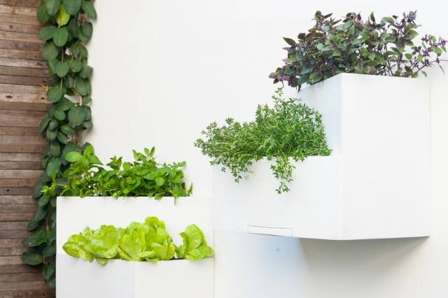 Pode ser utilizado tanto individualmente quanto agrupado. Sua formacom duas alturas e maior profundidade permite o desenvolvimento melhor de uma maior variedade espéciesdeplantasdo queas utilizadas em jardins verticais convencionais