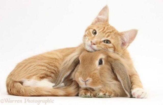 Já imaginou o quanto coelhos e gatos podem ser parecidos?