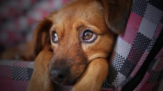 Pets têm 'currículo' divulgado no Linkedin para estimular adoção