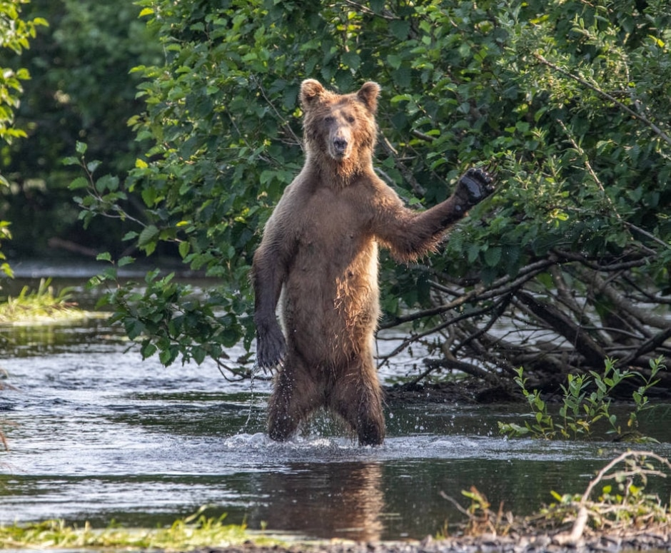 Eric Fisher / Comedy Wildlife Photo Awards 2020