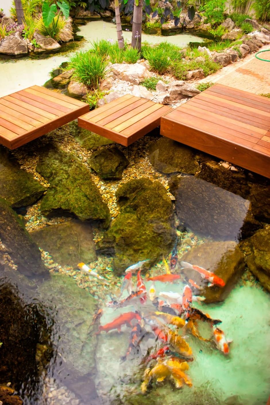 Lagos repletos de peixes comp em os jardins de ricardo for Lagos de jardin