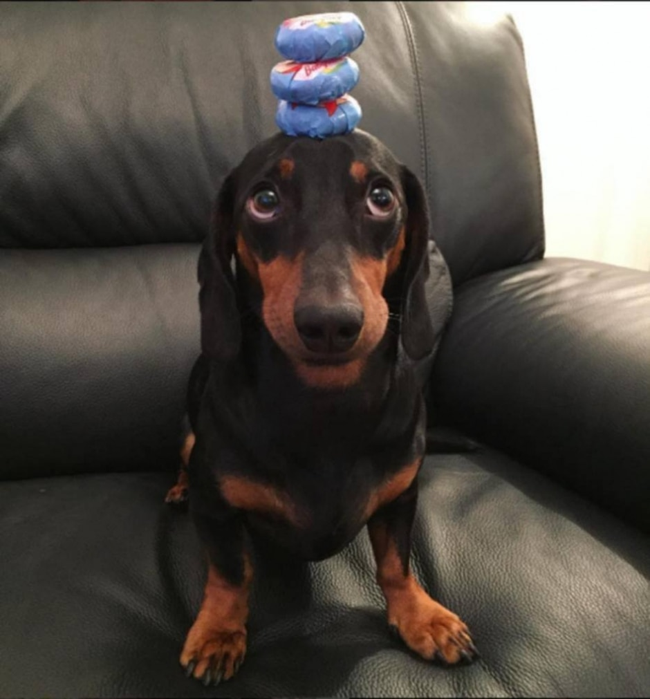 https://www.instagram.com/harlso_the_balancing_hound/?hl=en