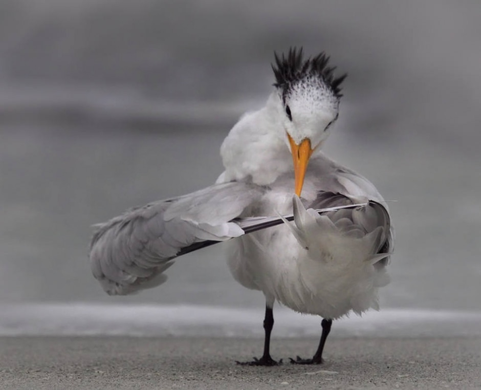 Danielle D'Ermo / Comedy Wildlife Photo Awards 2020