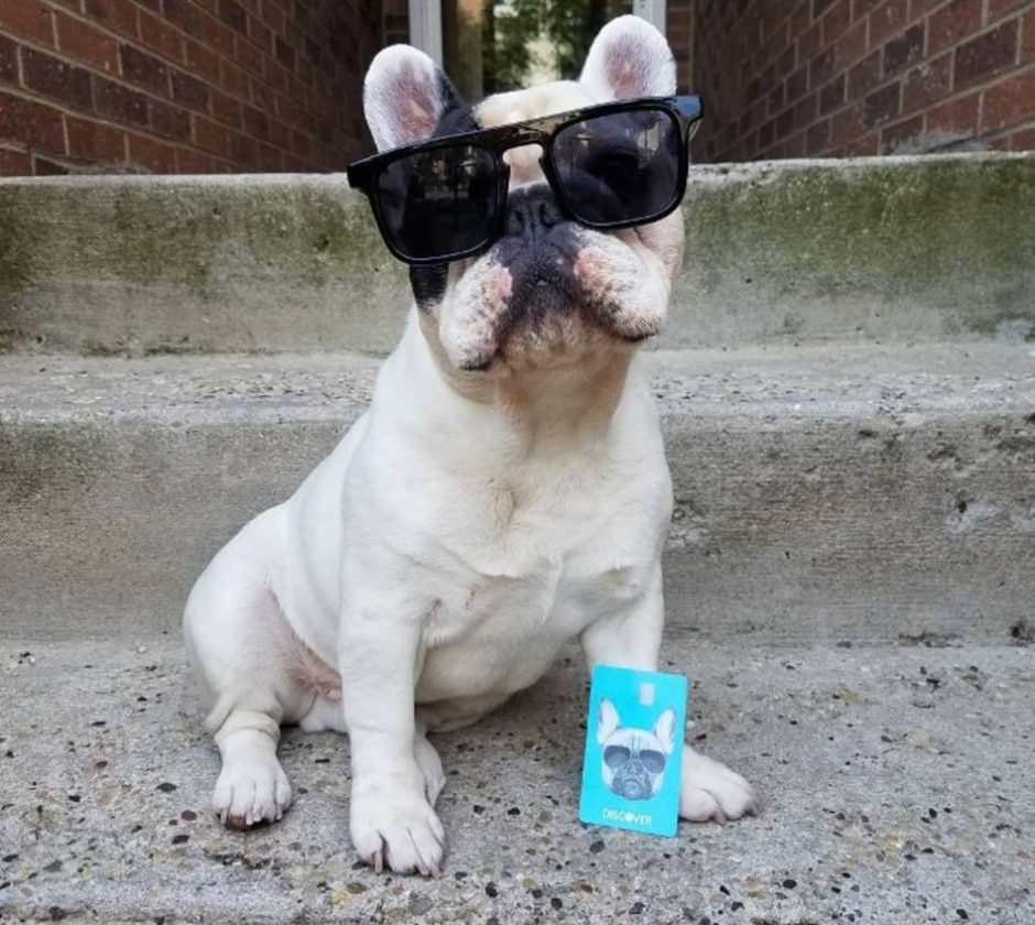 Instagram/manny_the_frenchie