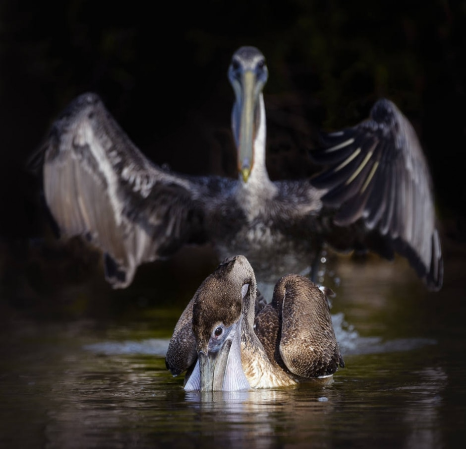Vicki Jauron / Comedy Wildlife Photo Awards 2020