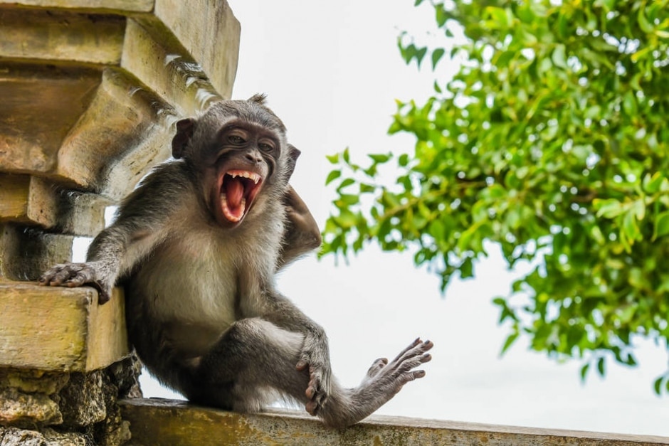 Luis Martã Cancãn / Comedy Wildlife Photo Awards 2020